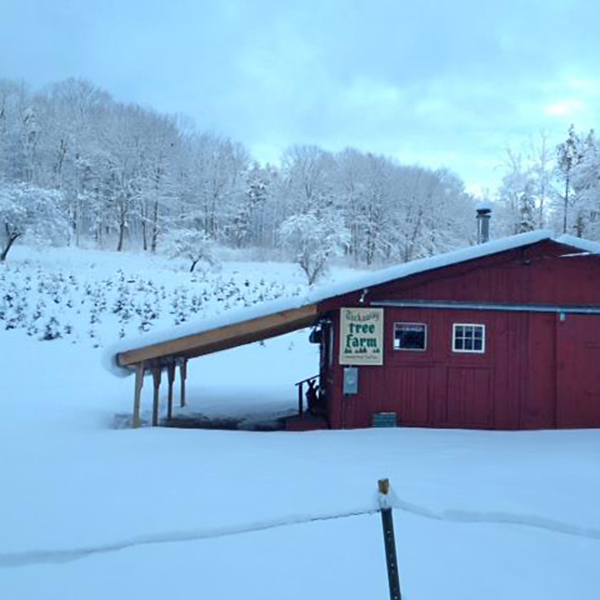 tuckaway tree farm shop in winter